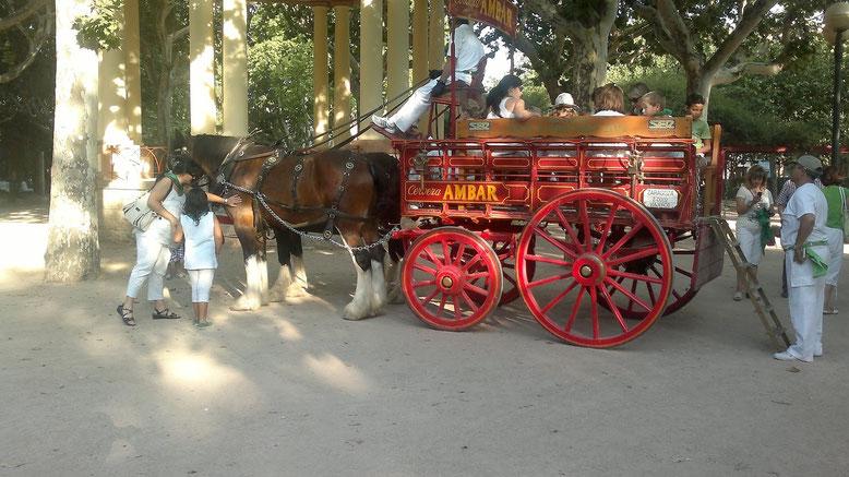 Narria La Zaragozana San Lorenzo Huesca 2015